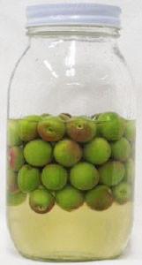 梅酒用秘蔵酒で小梅を漬ける