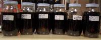 黒砂糖や黒糖と一緒に日本酒でつけた梅酒